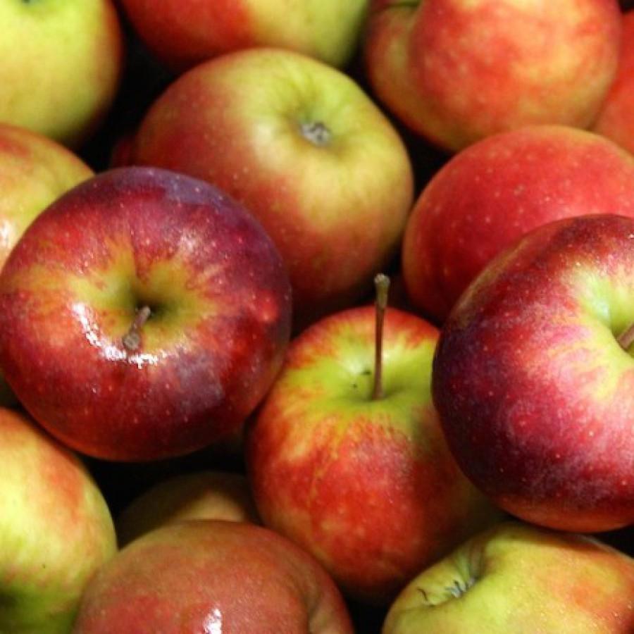 De appelwijzer