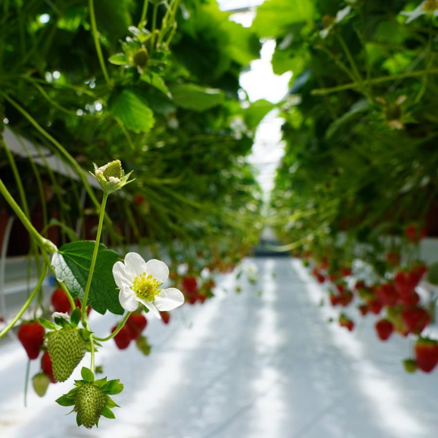 Van bloem tot gezond snoepje
