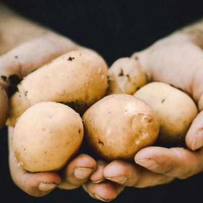 Aardappeldag op de Buytenhof