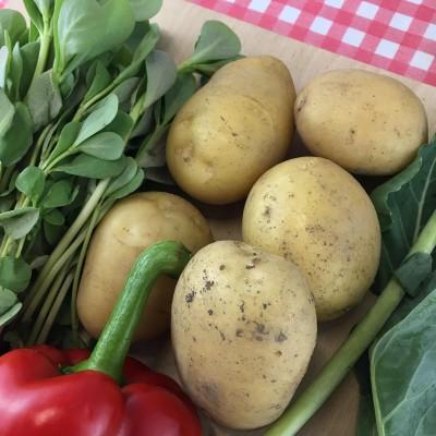 Aardappelwijzer