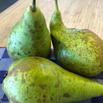 Onder de loep - Telen van appels en peren